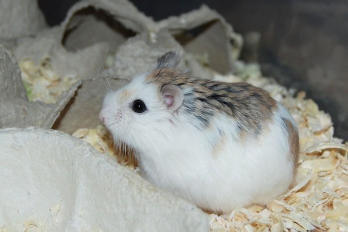 Hamsteriyhdistys